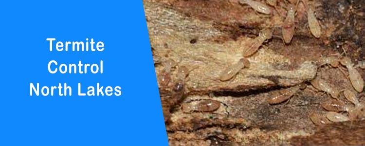 Termite Control North Lakes